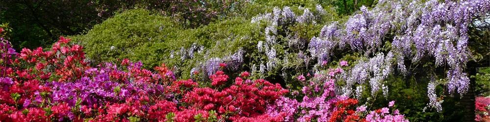 Flowergarden Keukenhof